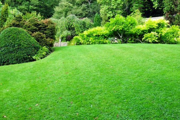 get rid of crabgrass in Springfield IL